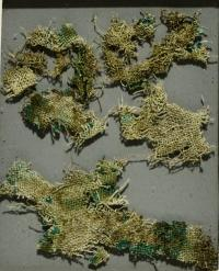 Ancient stinging nettles reveal Bronze Age trade connections