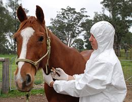 A new insight into horse flu