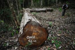 An illegal woodcutting site at the Trairao Amazonic forest reserve