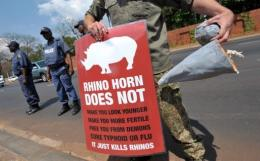A South African protester holds a sign and a fake rhino horn during a demonstration