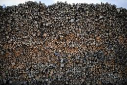 A stack of logs is pictured at the Forestry and Paper industry UPM-Kymmene factory