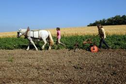 A woman plows on a farm in June 2012 on land in southwestern France