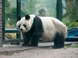Bao Bao was a gift from China to former German chancellor Helmut Schmidt