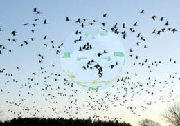 Birds evolved compass 'head up display'