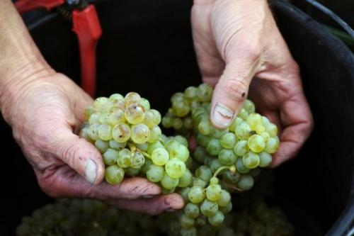 Bordeaux's dry white wines, picked well before a rainy spell, show great potential