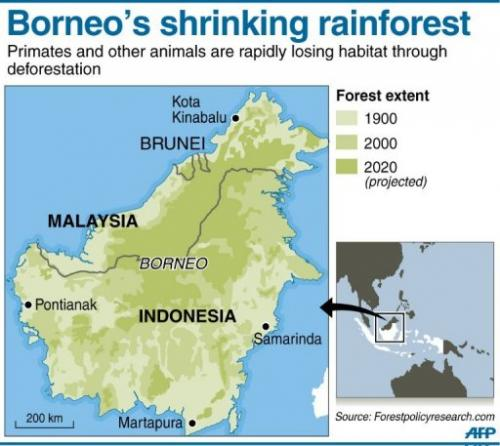 Borneo's shrinking rainforest