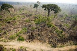 Brazil's National Indian Foundation estimates that there are 77 isolated indigenous tribes scattered across the Amazon