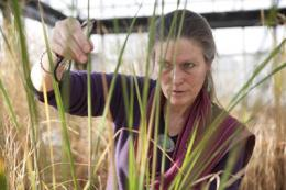 Breeder works to reduce aluminum toxicity in rice