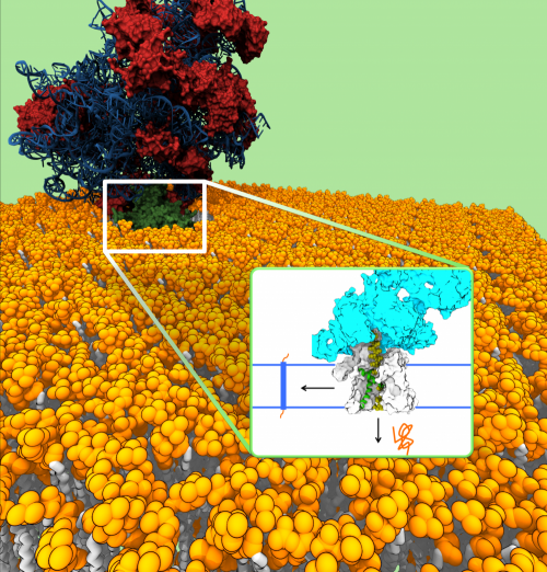 Caltech modeling feat sheds light on protein channel's function