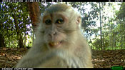 'Camera Trap' wildlife images from Malaysian forest