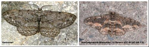 Camouflage of moths: Secrets to invisibility revealed