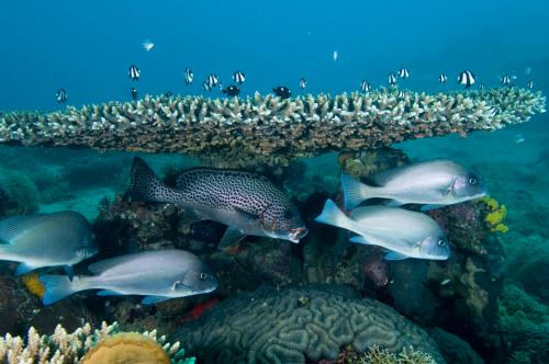 Study suggests the northern Mozambique Channel is home to second most diverse coral reefs in the world