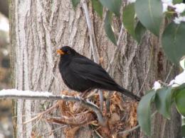 City birds adapt to their new predators