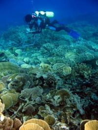 Coral scientists use new model to find where corals are most likely to survive climate change