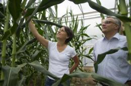 Разгадана старейшая тайна селекции растений