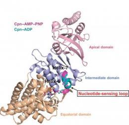 Correct protein folding