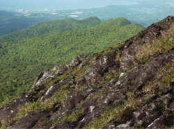 El Yunque rock, an icon of Puerto Rico, is eroding more slowly than expected, geologists discover