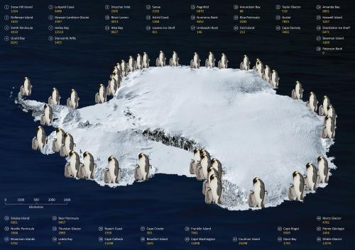 Counting penguins from space