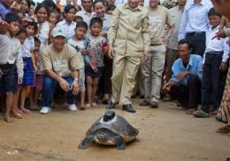 Endangered turtle to be tracked in Cambodia (AP)