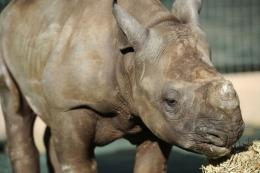Entabeni is one of the world's only dedicated orphanages for rhino calves