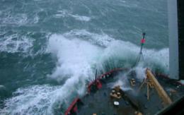 Even in winter, life persists in Arctic Seas