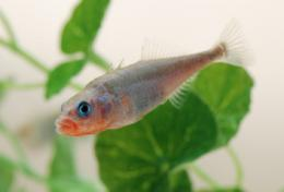 Evolution in action: Genetic study may answer why we have plenty of fish in the sea