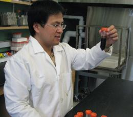 Evolving microbes help engineers turn bio-oil into advanced biofuels