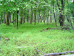 Facing modern forest management challenges: mitigation, adaptation