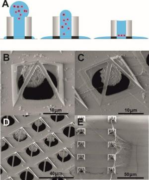 Capturing living cells in micro pyramids