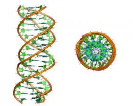 First description of a triple DNA helix in a vacuum