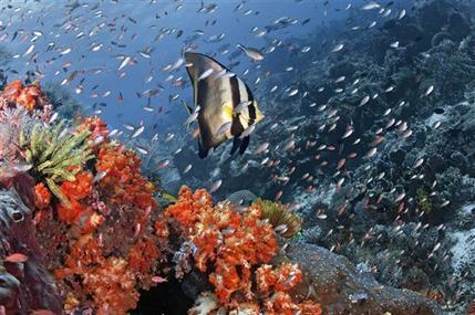 Fishermen blast premier dive sites off Indonesia (AP)