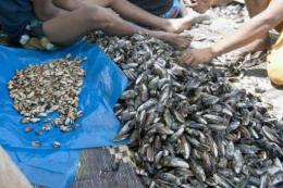 Fishermen shell mussels on a beach near Rabat