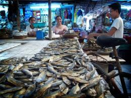 Fish on sale in the Philippines. where about 400 fish-farmers are to use