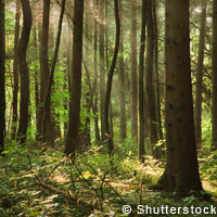 Forest management for a changing world