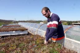 Green roof design may help control urban runoff