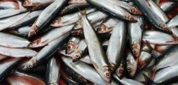 Herring can give us even more