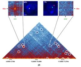 High-resolution mapping of the 3D organization of chromosomes