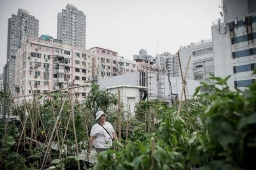 Hong Kong has been late to latch on to rooftop farming, which has been popular in London and New York for years