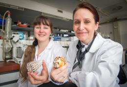 Cone snail venom controls pain