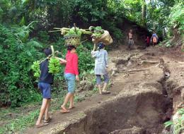 Incentives slow rainforest destruction, researcher says