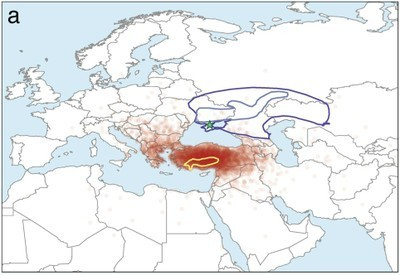 Indo-European languages originate in Anatolia