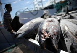 Indonesia workers load tuna from a fishing boat onto a truck