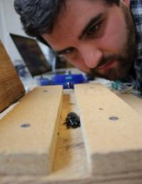 Insect Olympians: Students ask what makes horned passalus beetles so strong