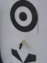 image of a bee performing a task