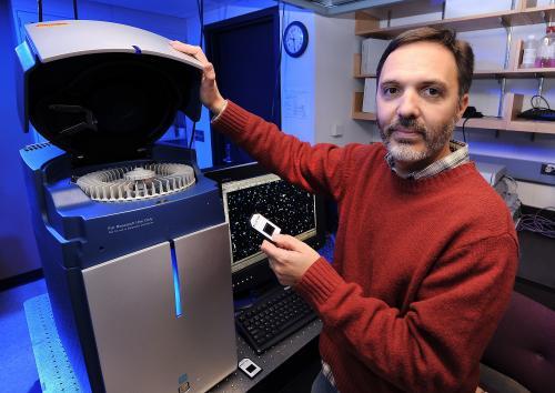 ISU study:  Aphid attacks weaken genetic defenses in soybeans, may open door for other pests