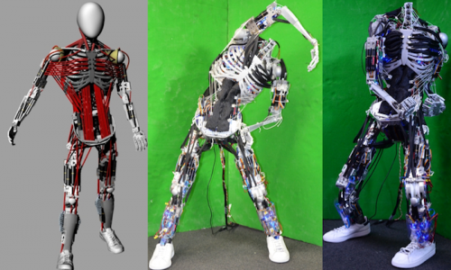 Japanese researchers build robot with most humanlike muscle-skeleton structure yet