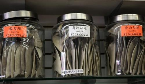 Jars filled with shark fins