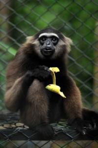 Kalaweit sanctuary has grown into the largest program for the rehabilitation of gibbons in the world