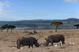 Kenya has the world's third largest rhino population