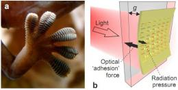 British team builds model showing metamaterials could be used to create gecko toe like adhesion